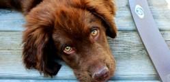 Scientists Create How to Build a Dog Recipe