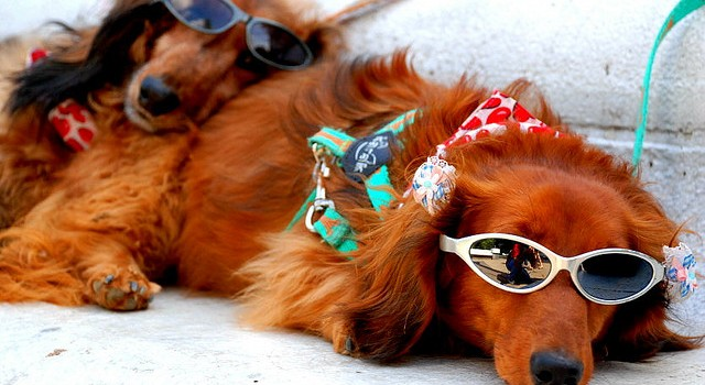 Summer Safety Guide for Your Pet's