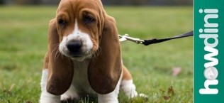 Must See Video Tips on Preparing for a New Fur Baby