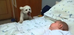 Viral Video: Puppy Wants to See the Newborn Baby Too!