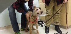 Watch Duffy, a Formerly Blind Dog, See Family After Surgery