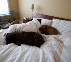 Poor Sleep Quality Due to Sharing Bed with Pets