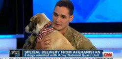 Must See Animal Adoption From Afghanistan