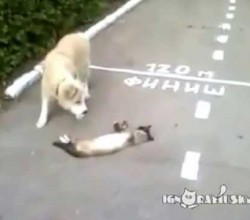 Must See Video! Dog Checks to See if Cat is Still Alive