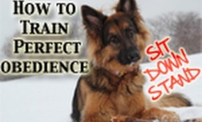 Teach Any Dog How to Be Obedient with Positive Reinforcement
